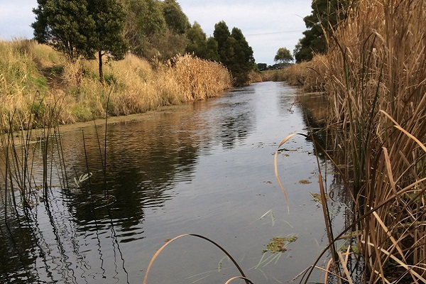 The Moyne River
