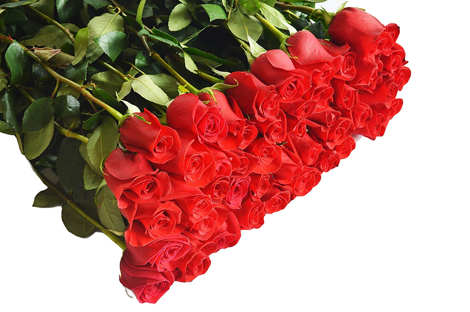 Mothers Day Classic – 100 Red Roses