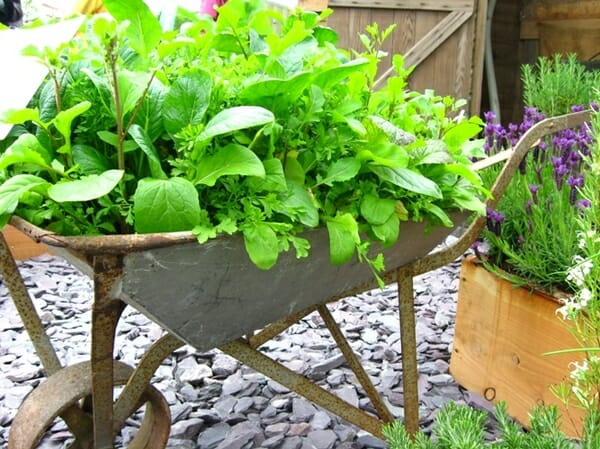 Portable Gardens for Renters and Tenants